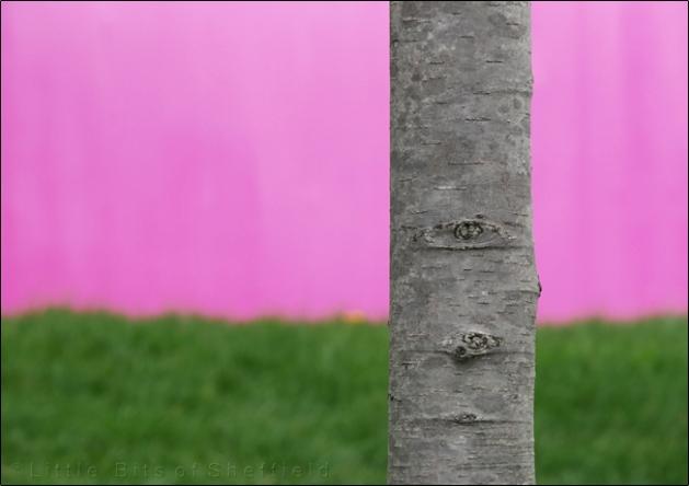 Tree   © Little Bits of Sheffield   SP1020063E